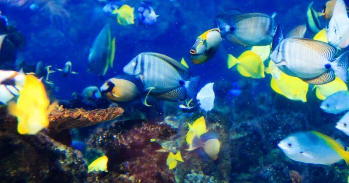 Per quest'anno il pesce è finito: stiamo letteralmente 'svuotando il mare'