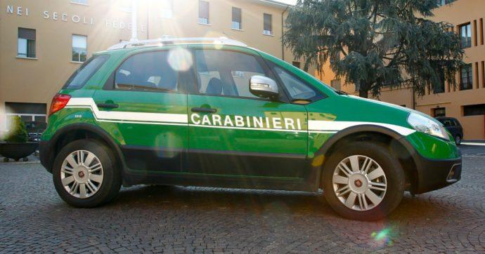 Corpo Forestale, la Corte europea boccia l'Italia sulla riforma Madia: ora si punta alla polizia ambientale