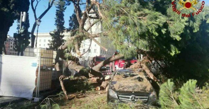 Roma, cade un pino su un auto in transito vicino al Campidoglio: ferita lievemente la conducente di 51 anni