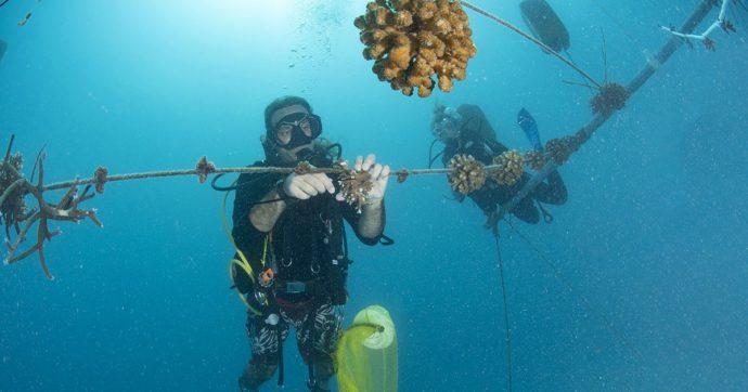 """Maldive, il progetto italiano per salvare la barriera corallina dallo sbiancamento: """"Con il riscaldamento globale è sempre più intenso"""""""