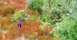 """""""Viviana Parisi è fuggita in un'altra direzione"""": l'indicazione del testimone sposta le ricerche del piccolo Gioele sulla collina"""