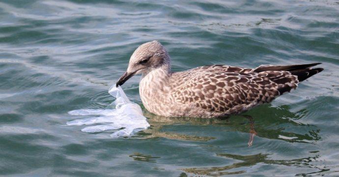 Coronavirus, ecco anche l'inquinamento marino: nelle reti da pesca trovati guanti e mascherine
