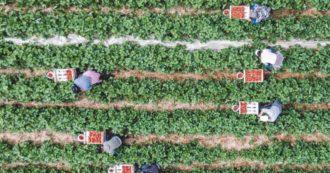 """Politica agricola comune (Pac), la Corte dei Conti Ue: """"I fondi destinati all'azione per il clima non hanno ridotto i gas serra emessi"""""""