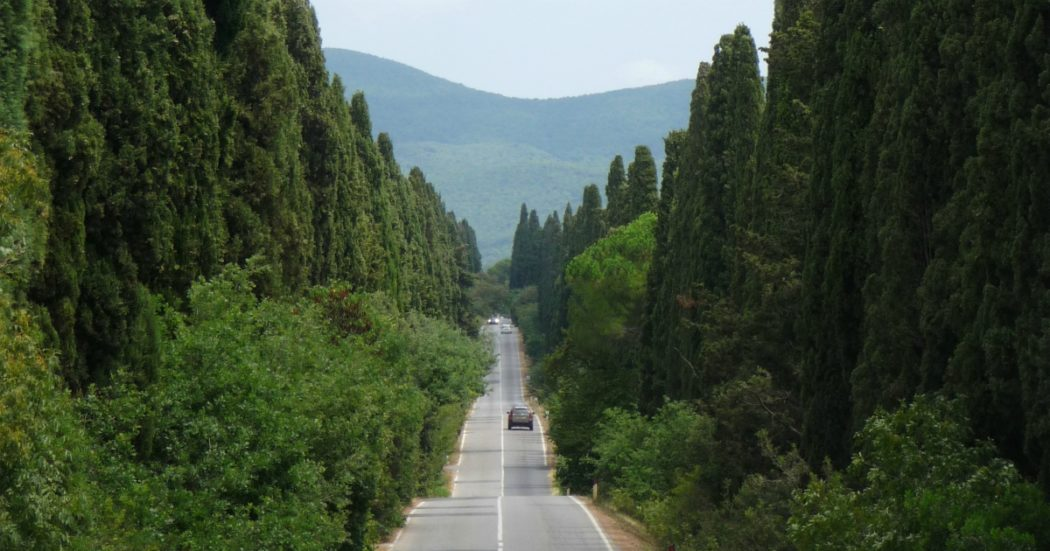 Milano, i pioppi cipressini sono a rischio. Una soluzione però ci sarebbe