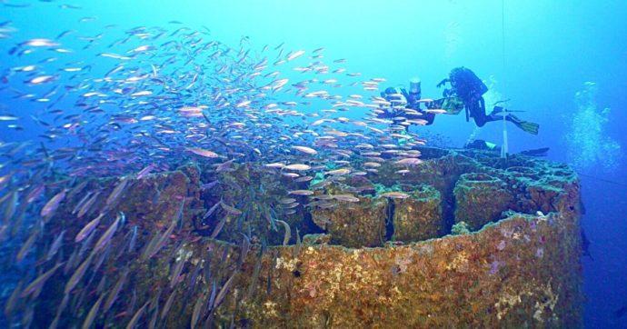 """Genova, """"l'Haven sia area marina protetta"""": l'appello della guida subacquea per salvare il relitto più grande del Mediterraneo"""