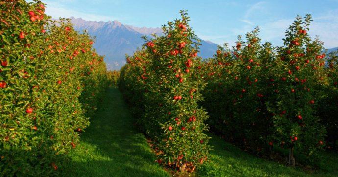 Il dibattito sull'uso dei pesticidi in Alto Adige: querela dell'assessore (che ora vuole ritarla) contro chi ha denunciato i rischi per la salute