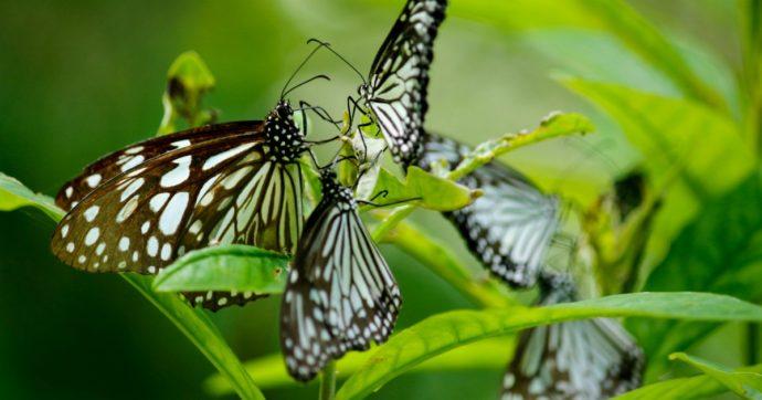 Strage di farfalle al Firenze Flower Show: chiuse in una teca sotto il sole, sono tutte morte