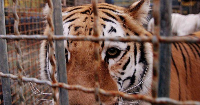 In Francia saranno banditi gli animali selvatici al circo. Stop anche alla riproduzione nei parchi acquatici e agli allevamenti di visoni
