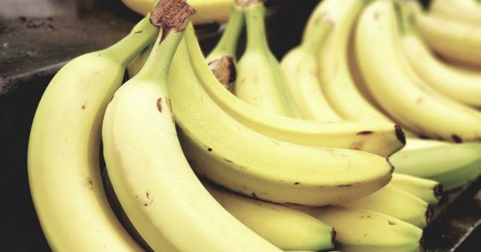 2021 senza banane? L'allarme degli esperti dopo l'eruzione del vulcano Sangay