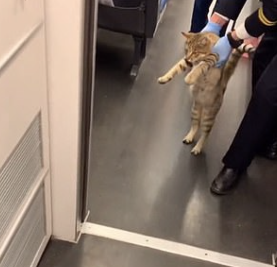 Gatto trovato senza biglietto sul treno ad alta velocità: viene fatto scendere (FOTO)