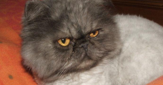 Organizzano il compleanno del gatto: 15 positivi al covid-19