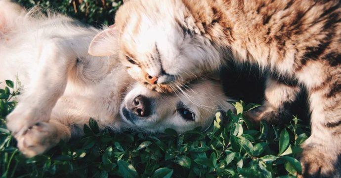 Aiuti e meno tasse per chi ha cani e gatti, ora l'Emilia Romagna solleciterà il governo