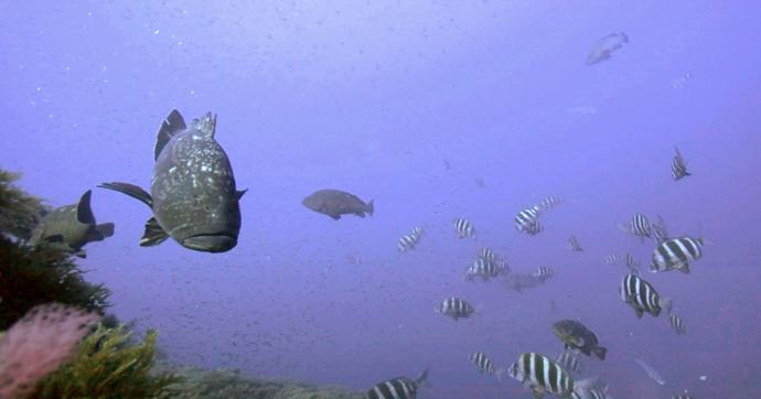 """""""Il dna ambientale per scoprire specie aliene. Come il pesce coniglio che danneggia la pesca"""": lo studio sulla biodiversità inesplorata"""