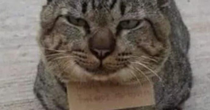 Gatto scomparso torna a casa con un scontrino: ecco cosa c'è da pagare