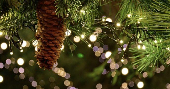"""""""Non buttate l'albero di Natale, mangiatelo!"""": le ricette di Julia Georgallis per """"cucinare"""" pini e abeti dopo le feste"""