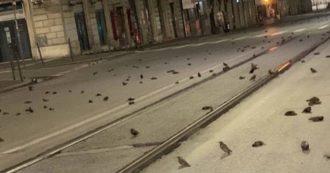 A Roma centinaia di uccelli morti in strada per i botti di Capodanno. Schiantati contro le finestre delle case e i fili dell'alta tensione (Video)