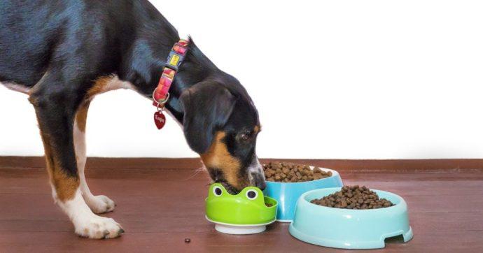"""70 cani morti per la """"muffa assassina"""" presente nel cibo per animali: ecco il marchio sotto accusa"""