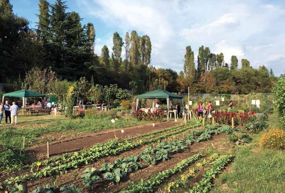 Orti in città: la vera agricoltura a chilometro zero che procura pure degli amici
