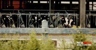 Italia primo importatore in Europa di carne brasiliana: dove finisce e perché non viene dichiarato. L'anticipazione di PresaDiretta