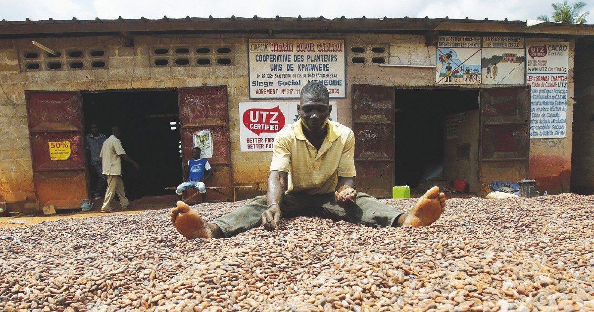 Cacao amaro per i forzati dei campi