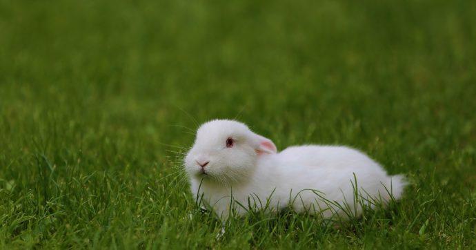 Allevamenti, è ora che l'Unione Europea si impegni seriamente senza dimenticare nessun animale