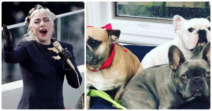 Lady Gaga, malviventi sparano al suo dog sitter e rapiscono i suoi cani. Lei offre 500mila dollari a chi glieli riporta