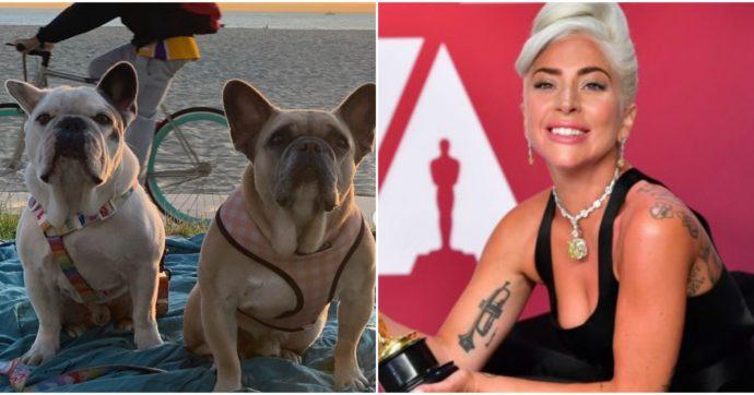 I cani di Lady Gaga sono salvi: una donna misteriosa li ha consegnati alla polizia di Los Angeles