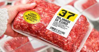 L'insostenibile costo della carne – Le emissioni legate al ciclo di vita dei bovini inquinano come le più grandi centrali a carbone d'Europa