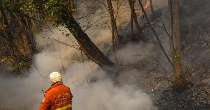 Insieme al vento arriva la morte dei boschi, ma non si fa nulla per prevenirla
