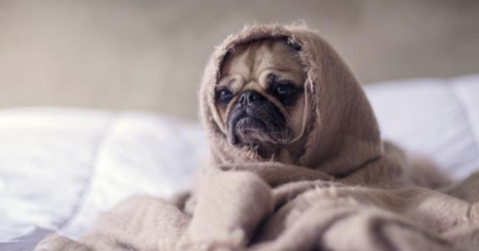 """Insonnia, la pandemia ci ha rubato il sonno: ecco quali sono i rimedi """"soft"""" per dormire bene"""