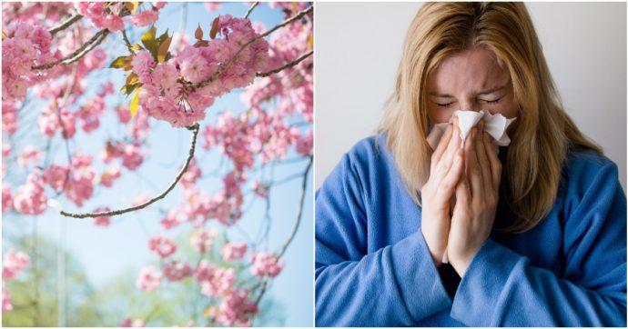 Allergie di primavera: quali sono i sintomi, i rimedi e i rischi dei farmaci tradizionali