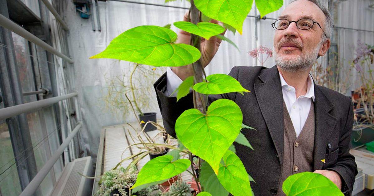 """Il prof Mancuso: """"Con il lockdown abbiamo vissuto come piante. Impariamo da loro"""""""