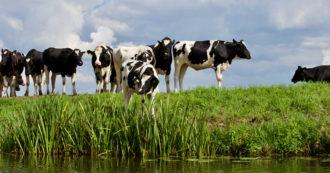 Giornata mondiale dell'acqua, l'altra faccia dello spreco è la carne: ecco quante risorse idriche servono per gli allevamenti intensivi