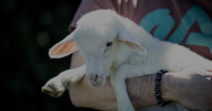 Mangerete agnello a Pasqua? Se la risposta è no, non siete soli
