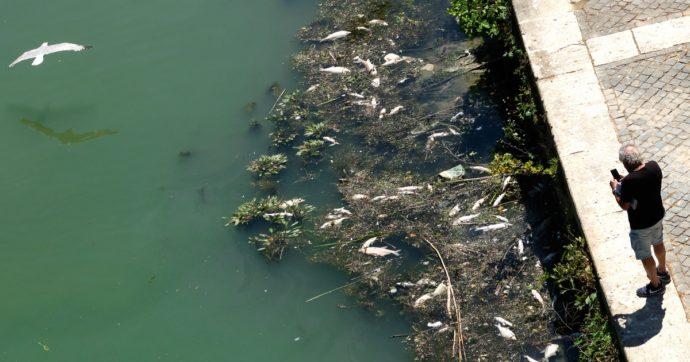 Transizione ecologica, una società fiorente e una natura devastata non possono coesistere