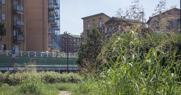 Come scrive Alessandra Viola in 'Flower Power', dovremmo riconoscere alle piante i loro diritti