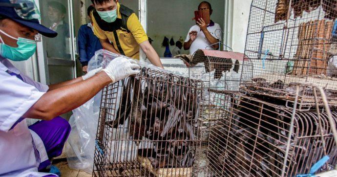 """Coronavirus, l'Oms chiede lo stop alla vendita di animali selvatici vivi nei mercati: """"Fonte di oltre il 70% delle nuove malattie infettive"""""""