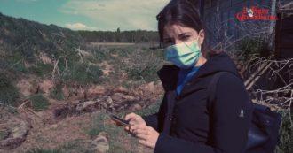 Discarica di maiali fuori dall'allevamento. Il gestore nega il rischio ambientale e sanitario, poi copre la fossa prima che arrivino i controlli – Video
