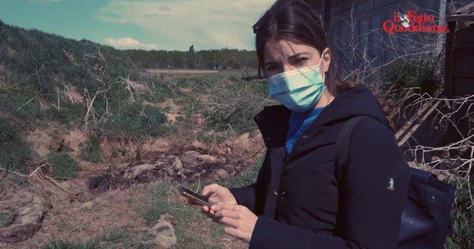 """Discarica di maiali fuori dall'allevamento, l'interrogazione alla giunta della Lombardia: """"Quali controlli sono stati effettuati?"""""""