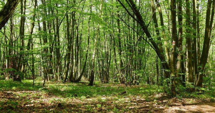 Giornata della Terra, non basta piantare nuovi alberi se si punta ancora sulla combustione