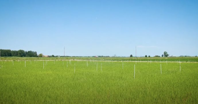 Chissà se nel Recovery Plan ci sarà spazio anche per l'agricoltura biologica