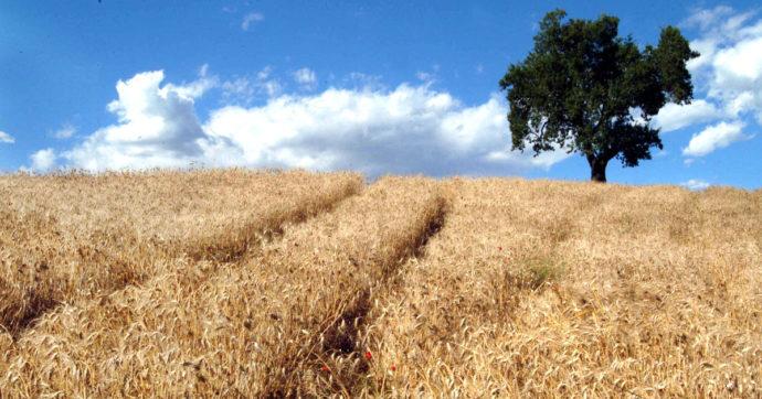 Prezzi di grano, mais e soia ai massimi dal 2013. Timori per il costo dei beni alimentari di base e per l'inflazione