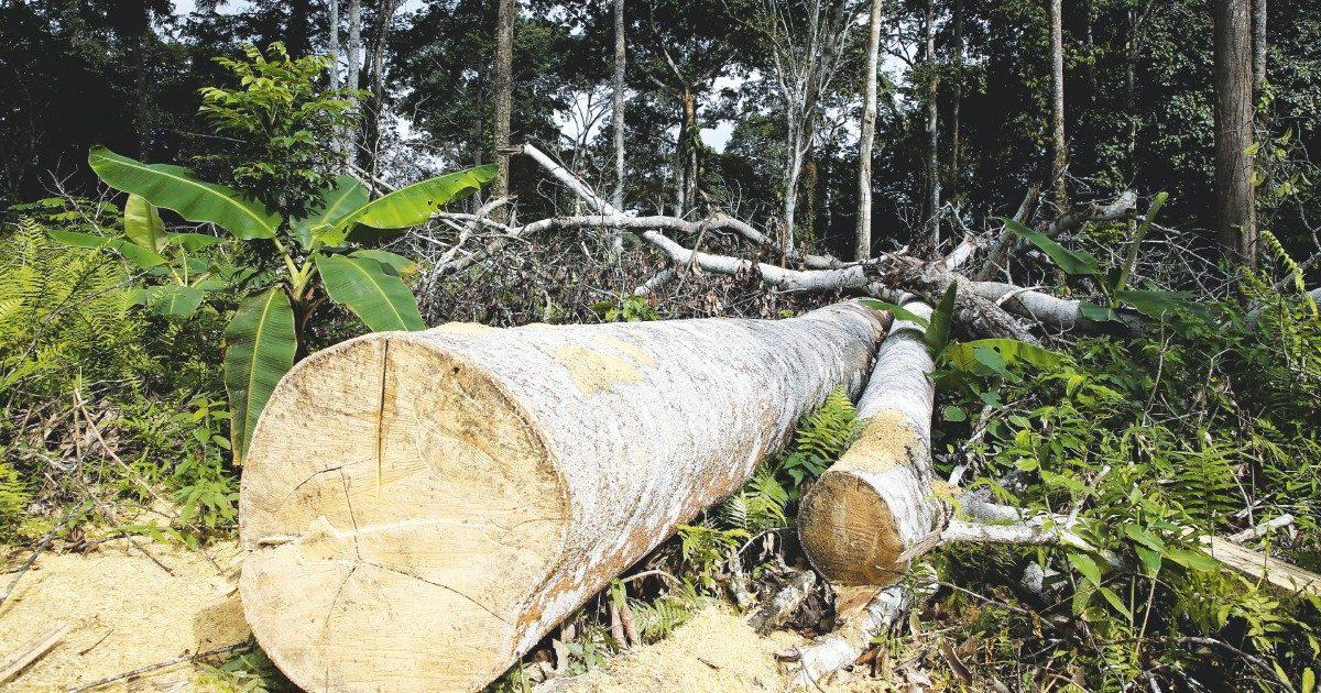 La Total è green per finta: non riduce i veleni ma pianta alberi