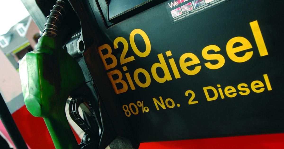 Oli dannosi per l'ambiente e costi alti per gli automobilisti: ma è così green il biodiesel?