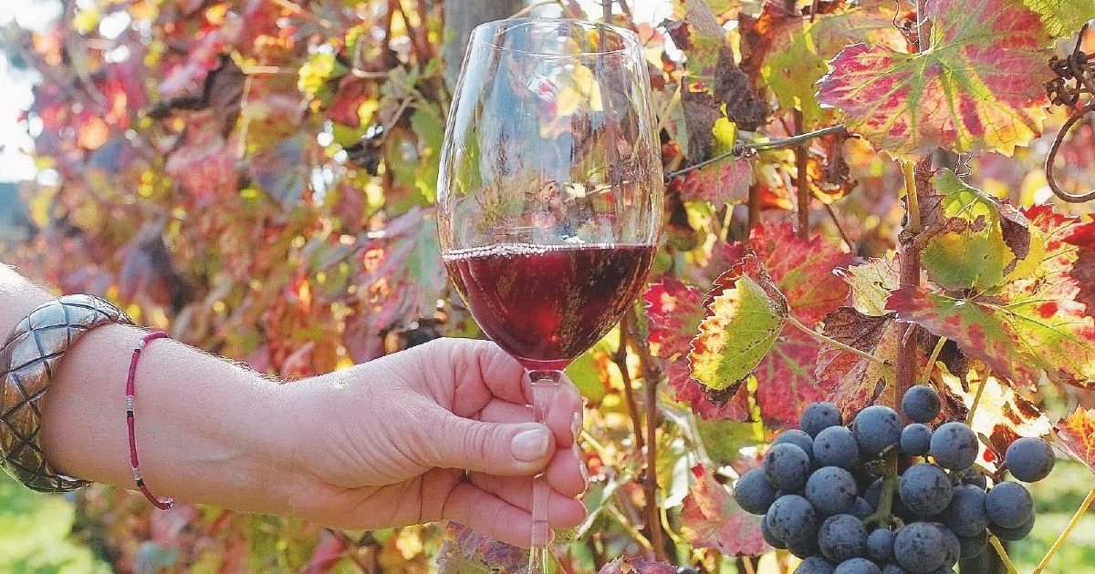 L'Ue vuole annacquare il vino per abbassare il tasso alcolico. Coldiretti sul piede di guerra