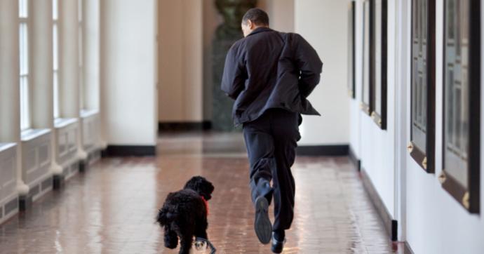 """Barack Obama, morto Bo il cane di famiglia: """"Abbiamo perso un vero amico, ne avevamo bisogno"""""""