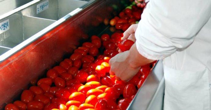 Prezzi dei barattoli alle stelle e boom della domanda: la tempesta perfetta che mette a rischio la conserva di pomodoro made in Italy