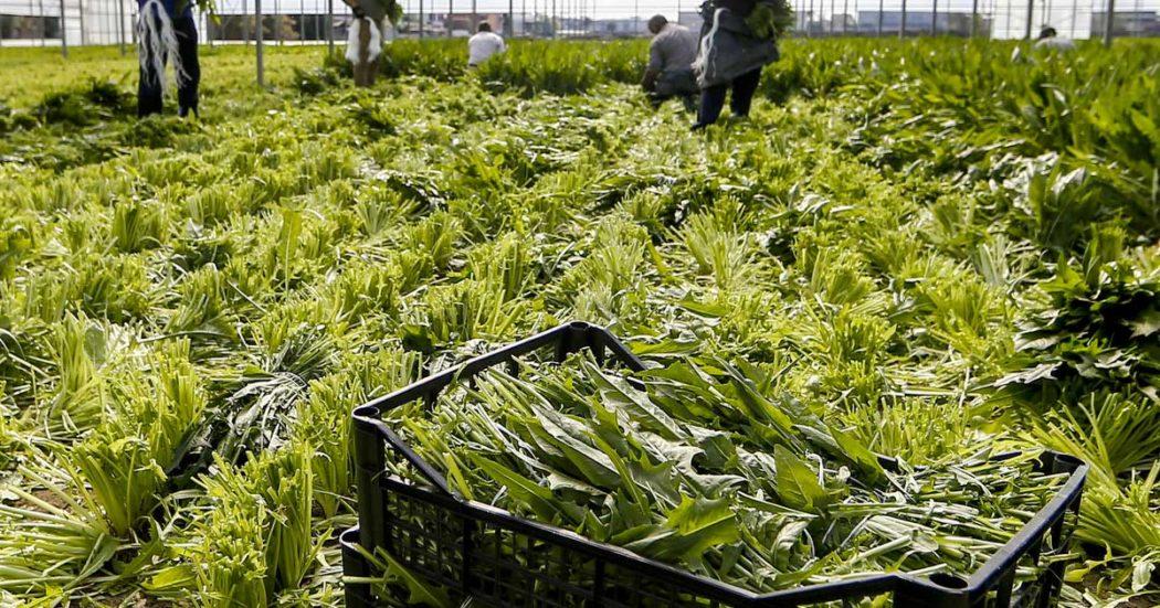 """Fondi europei per l'agricoltura, sei Regioni del Centro-Sud contro la proposta di riparto di Patuanelli: """"Perderemmo soldi"""". Ma non riescono a spenderli"""