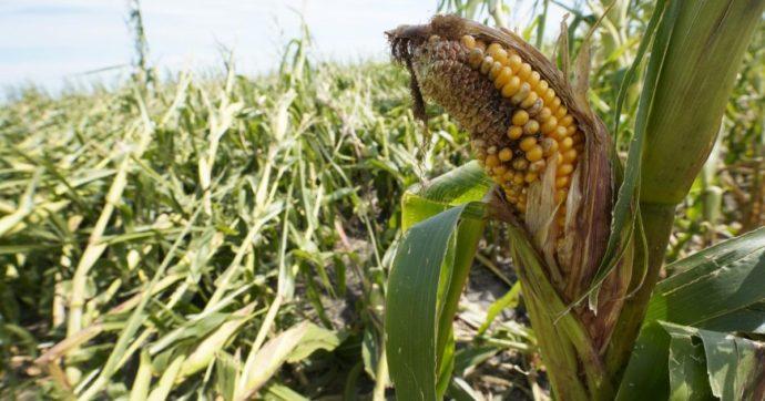La lunga corsa dei prezzi alimentari: rialzi da 11 mesi consecutivi. Non lontani i valori del 2011 che innescarono le primavere arabe