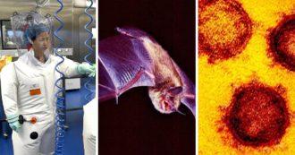 Covid, qual è l'origine del virus? Le ipotesi a confronto, le indagini Usa e il finanziamento (bloccato) all'Istituto di Virologia di Wuhan